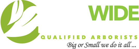Statewide Tree Service